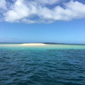圧倒的な美しさ!真っ白な珊瑚の島と、魚にあふれた西表島のダイビング【石垣島2】