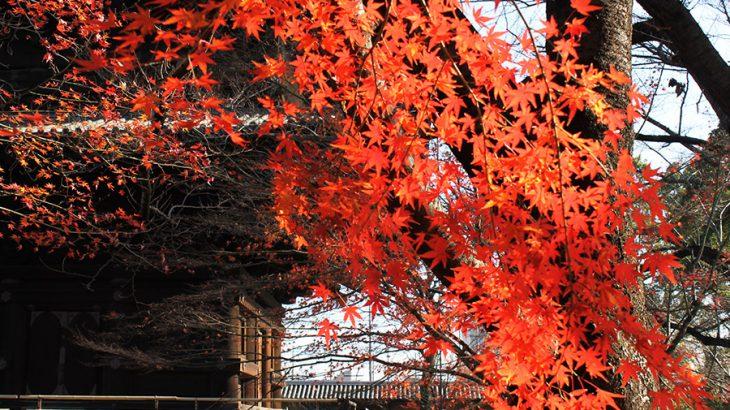 京都の人々に親しまれている、ものすごい賑わいの「弘法さん」【東寺】