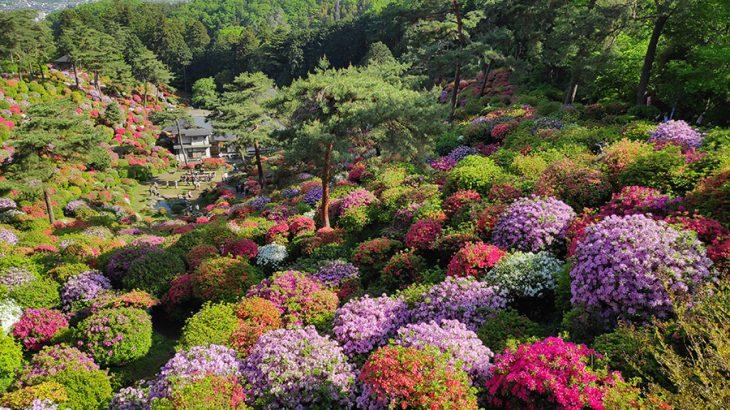 20種2万本のつつじが咲き乱れる、東京屈指のつつじの名所【塩船観音寺】