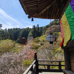 ご本尊の観音様に直接触れる長谷寺の特別拝観と、本堂からの絶景そして枝垂桜